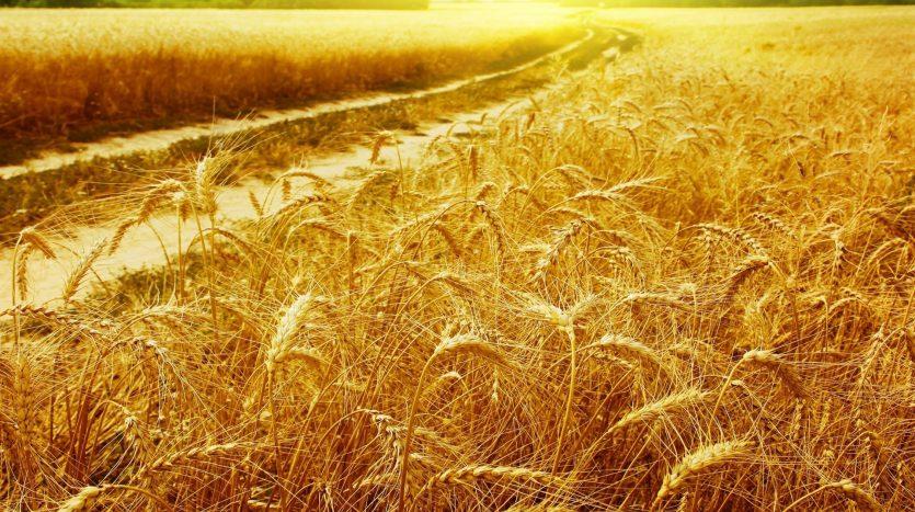 Precio de los campos en Argentina