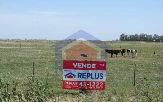 Campo en venta en Pehuajo 42 ha ID30094